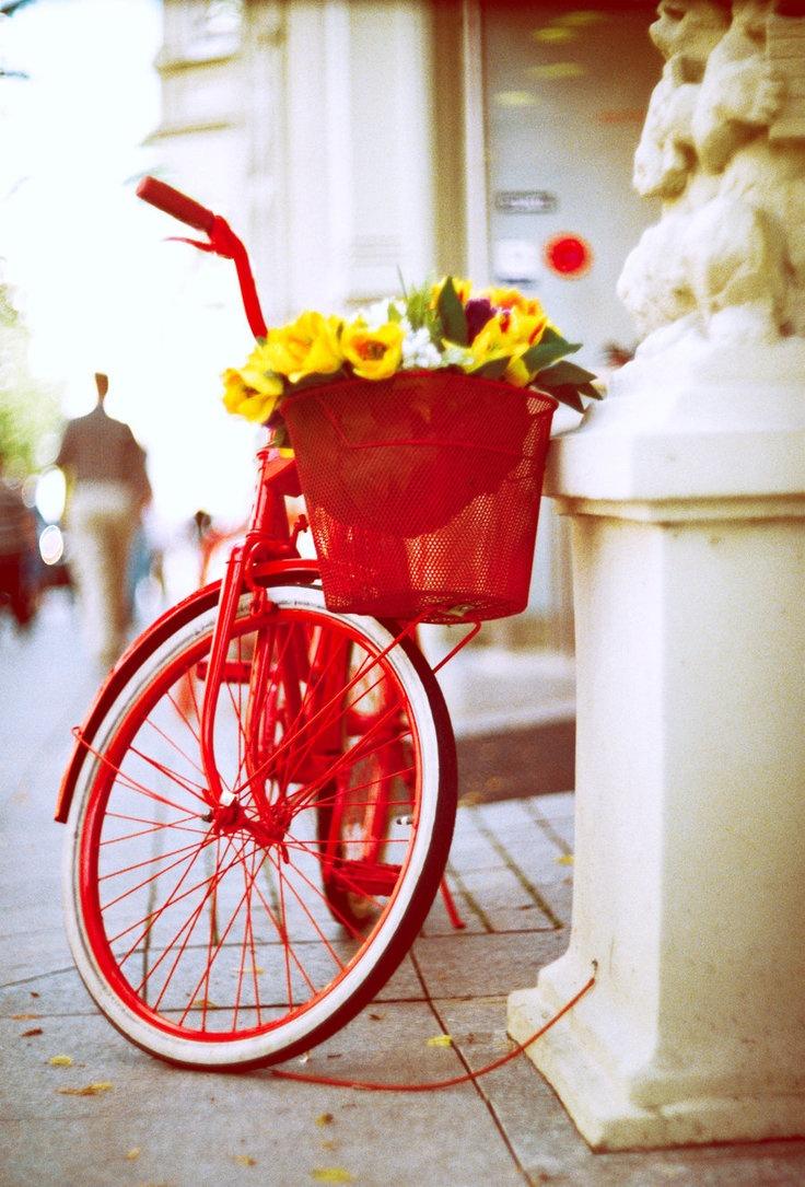 bike-trend